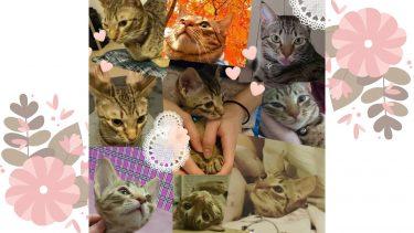愛猫の誕生日にあげたら無茶苦茶喜んだもの~オシキャットるか君の成長記ブログ no.8~