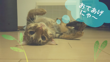 飼っている猫ちゃんが色んなところに乗って困ったときの対処方法