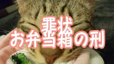 我が家の猫さんをお弁当箱の刑に処してみたら可愛すぎて悶絶