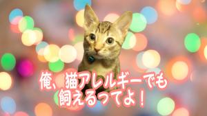 猫アレルギーでも飼える?オシキャットの魅力を解説