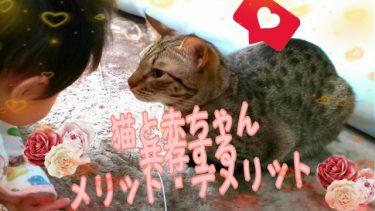 【猫と赤ちゃん】新たに同居するメリット・デメリットをまとめてみた